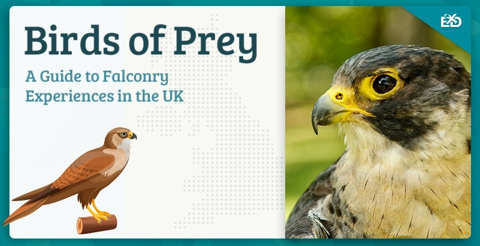 Birds of Prey: A Guide to Falconry Experiences in the UK