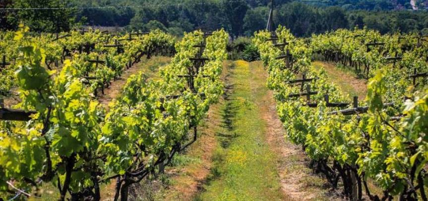 East Sussex Vineyard Tour For Three-1