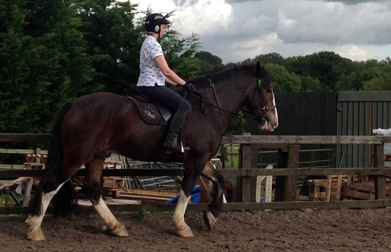 horse-riding-lesson-experience-in-hampshire.jpg
