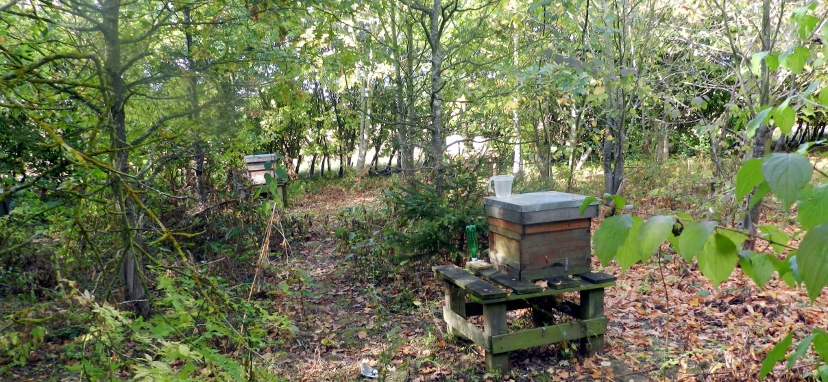 Beekeeping Experience Day Bedford-4