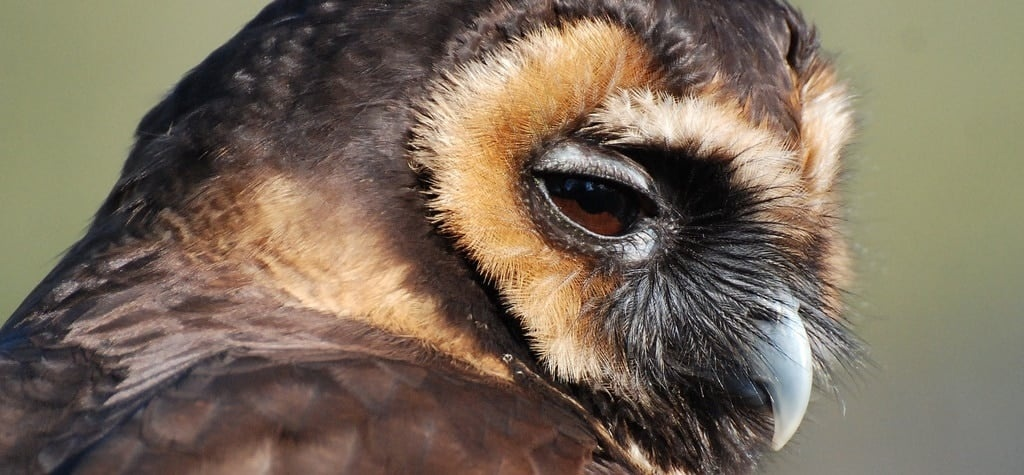 One Hour Owl Experience - Lincolnshire-5