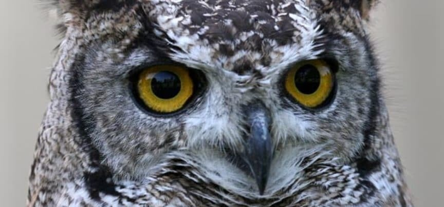 One Hour Owl Experience - Lincolnshire-4