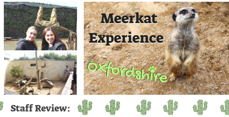 Staff Review: Meerkat Experience in Oxfordshire