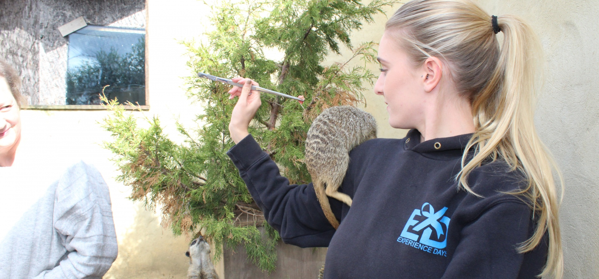 30 Minute Meerkat Experience - Oxfordshire-6