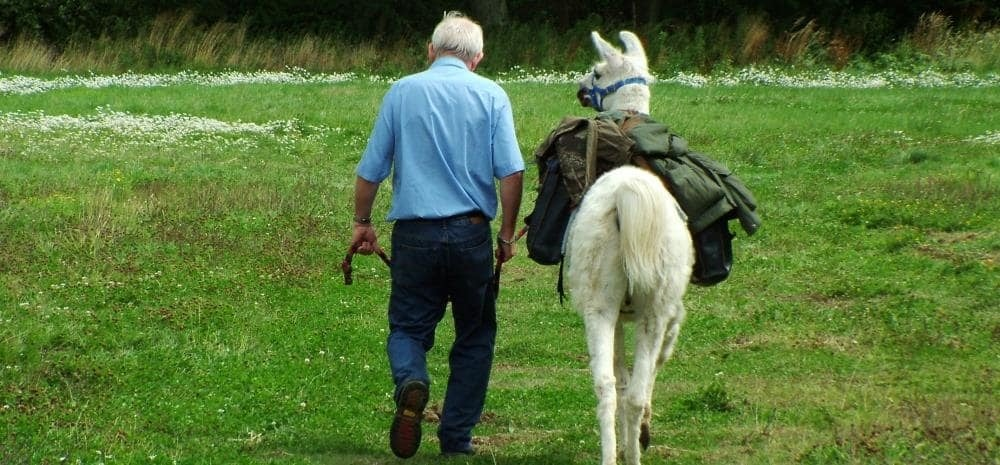 Half-Day Llama Trekking Experience for 2 in Northamptonshire-3