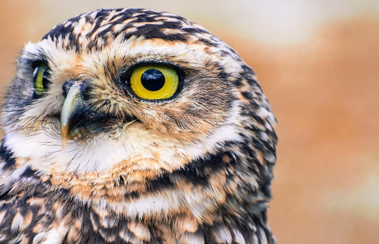 owl-and-bird-of-prey-day.jpg
