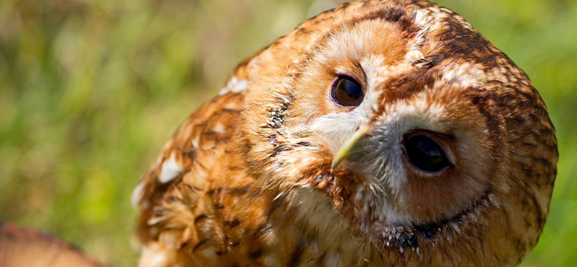 Half Day Owl Experience - Bedfordshire-4