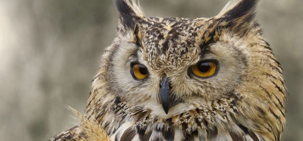 Half Day Falconry Experience - Fife