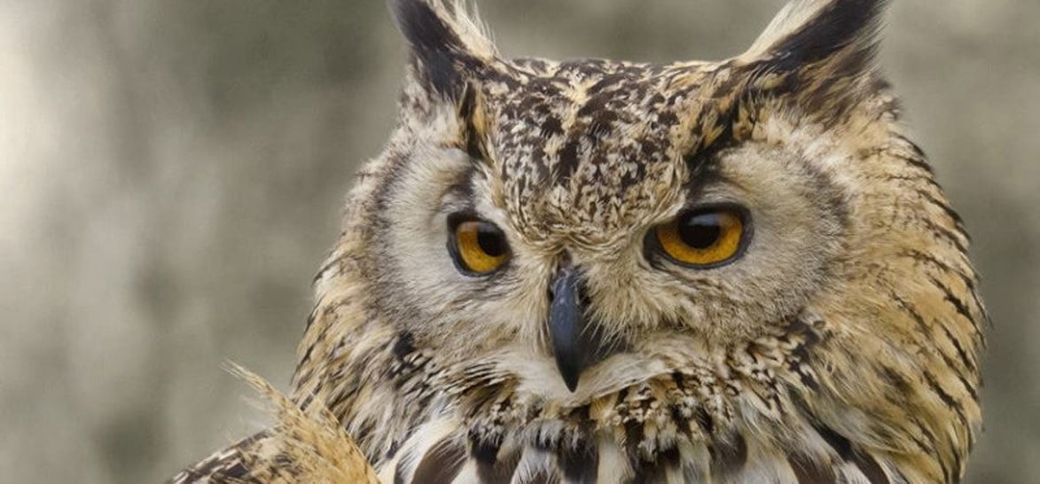 Owl Experience In Devon