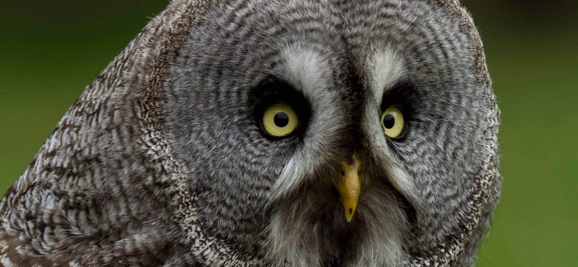 Half Day Owl Experience - Bedfordshire-2