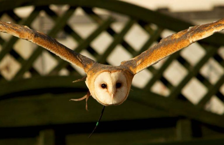 owl-experience-in-cheshire.jpg