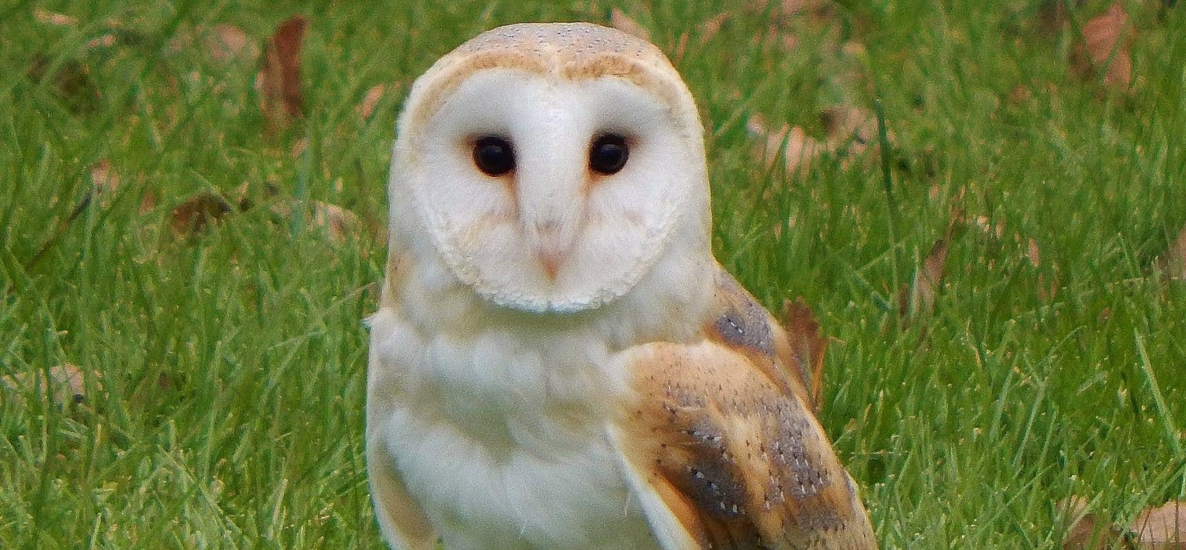 One Hour Owl Experience - Lincolnshire-1