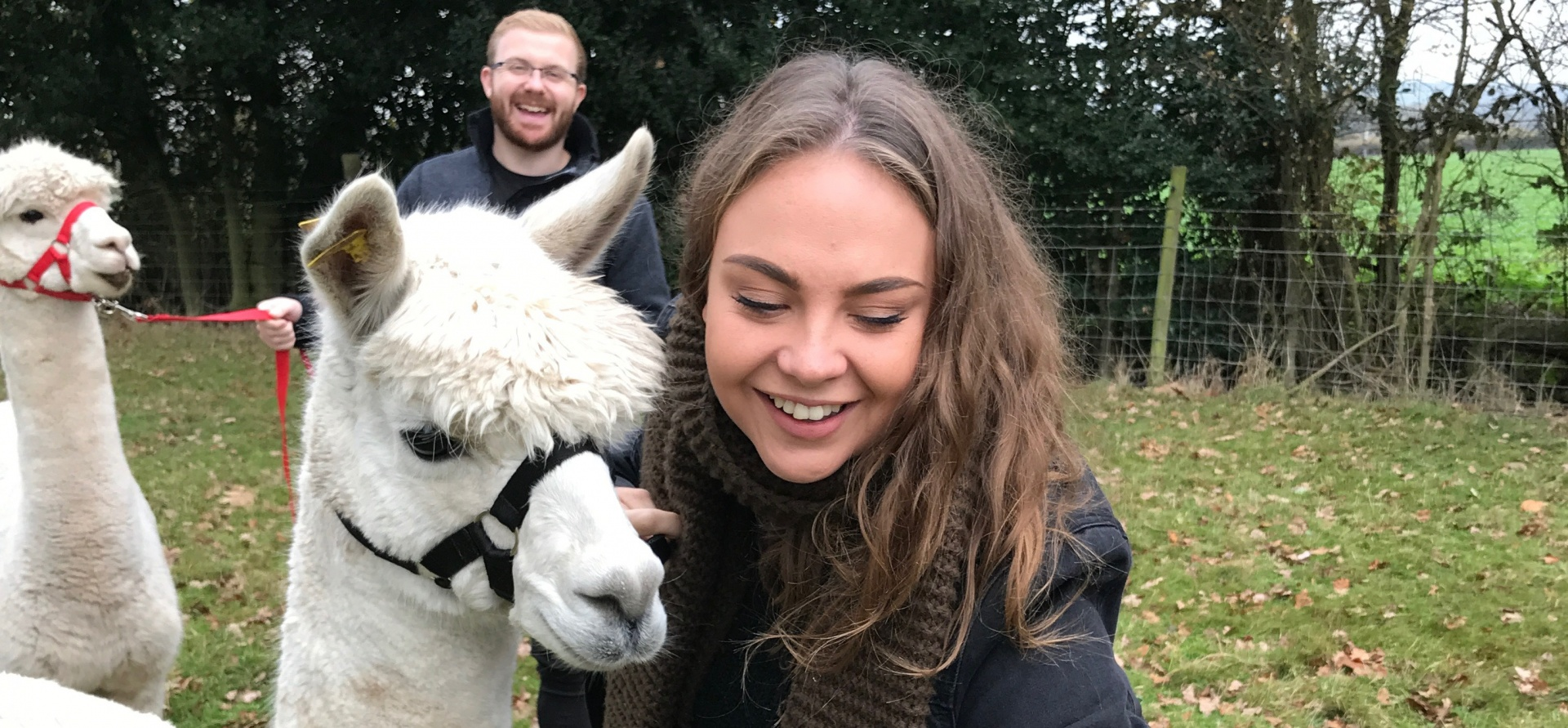 Parent and Child Alpaca Experience for 2 in Warwickshire-4