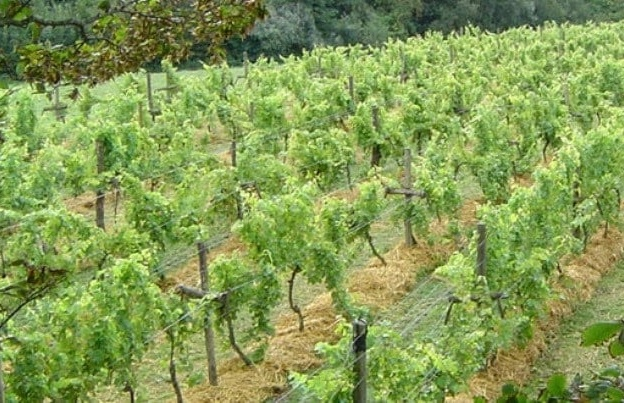 vines-wine-tasting-tour.jpg