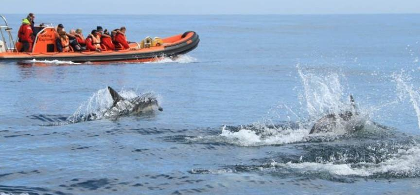Pembrokeshire Whale and Dolphin Watching Experience-5