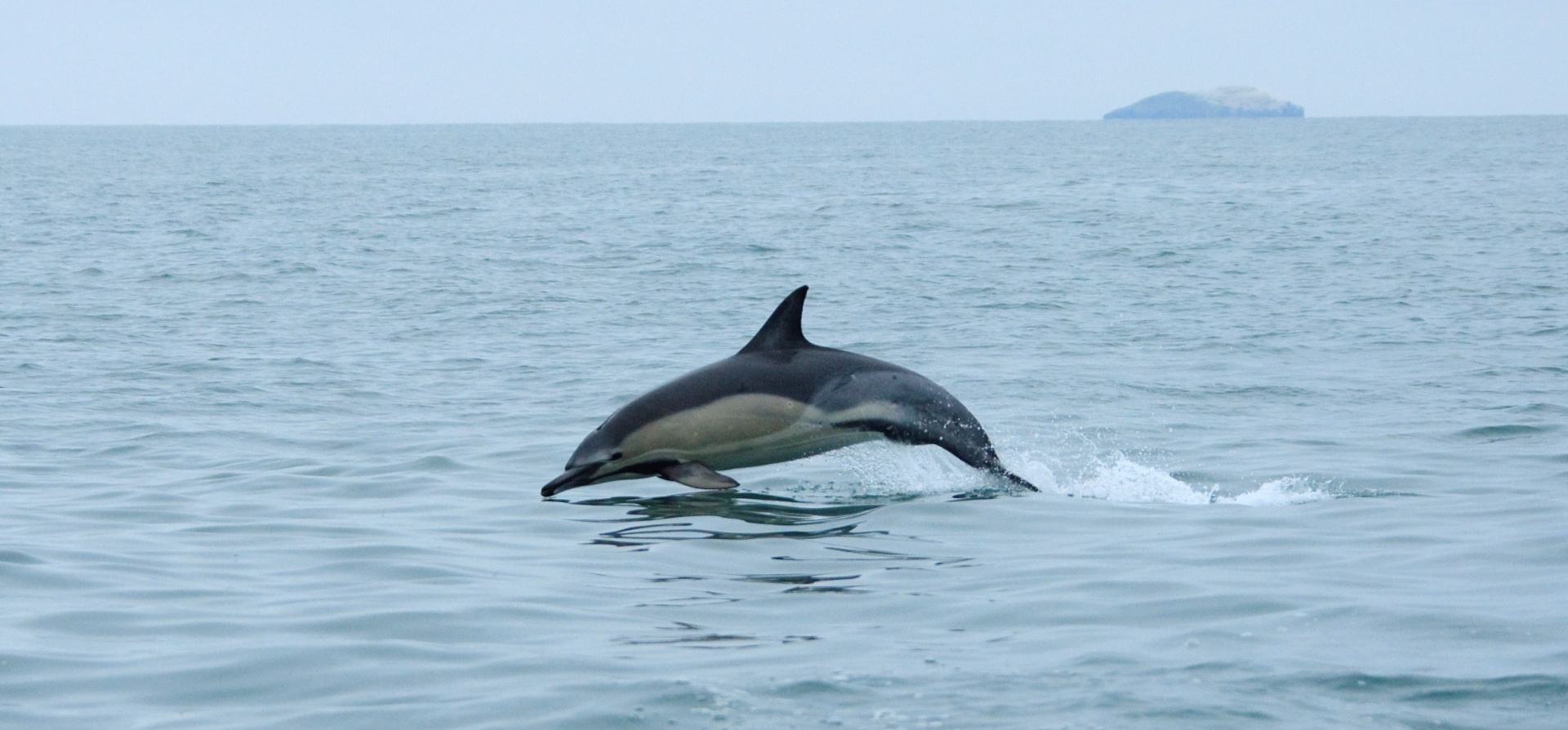 Pembrokeshire Whale and Dolphin Watching Experience-3