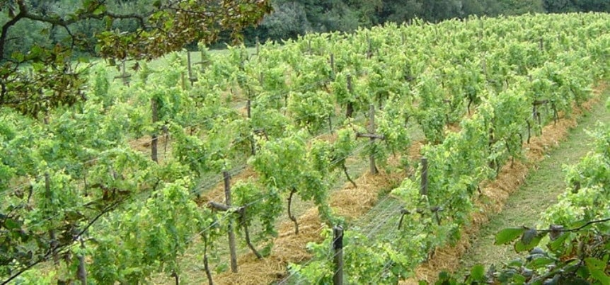 Deluxe Wine Tasting Tour for Two in East Sussex-3